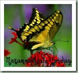 Between Naps on the Porch- Metamorphosis Monday