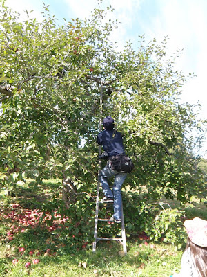 リンゴの木に登る