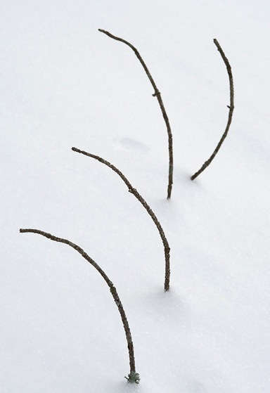 WinterRhythm-44.jpg