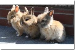 drei-suesse-teddyhasen-foto-bild-38371976