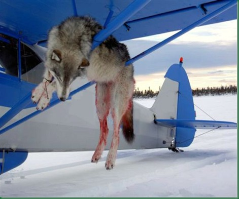 wolf_and_plane_2_adfg[1]