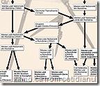organigrama masonica romana