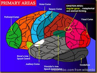 Primary Brain Areas