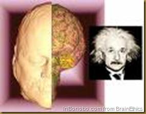 Einstein brain