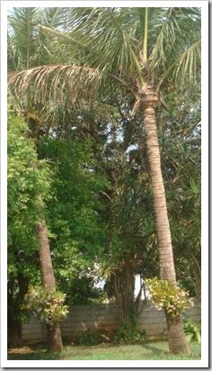 Floresta no sítio da Marili Campos (4)