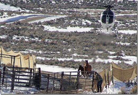 Antelope01-23-2011 031 (2)
