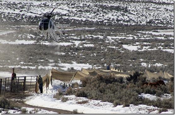 Antelope01-23-20111 042 (3)