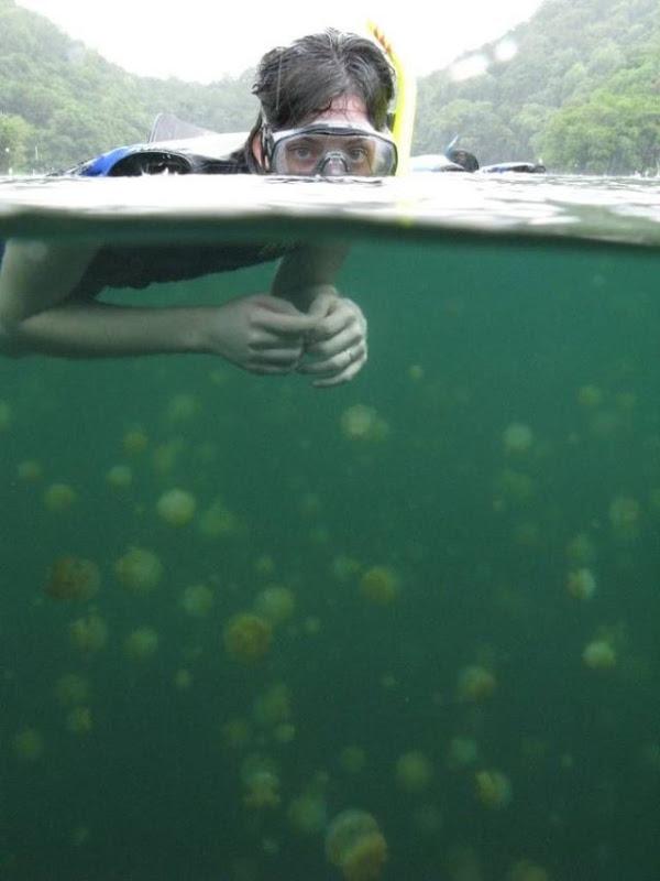 palau 07 Swim among thousands of Jellyfish