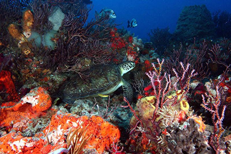 aquarium%20contest Mote Aquarium Reef Photo Contest
