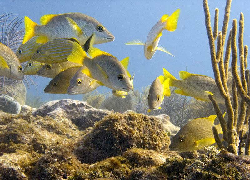 aquarium%20contest3 Mote Aquarium Reef Photo Contest
