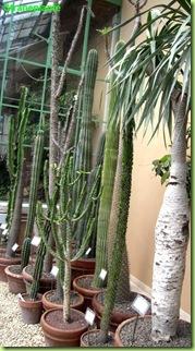 serra monumentale succulente