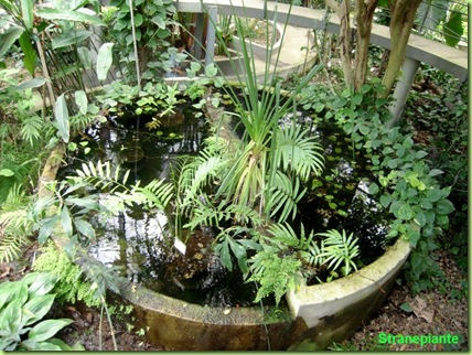 vasca serra tropicale roma