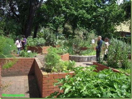 Orto dei Semplici orto botanico roma piante medicinali