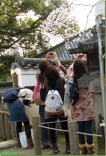 giapponesi foto fiori