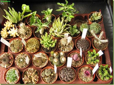 acquisti primavera landriana 2010