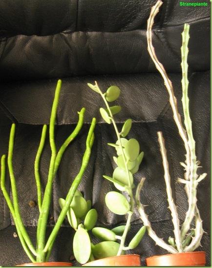 landriana 2010 piante lunghe