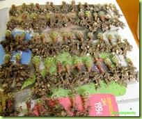 semenzali-mammillaria-duwei