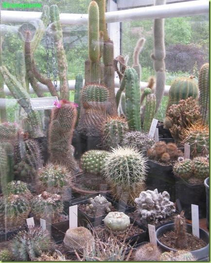 mix succulente giardino amsterdam