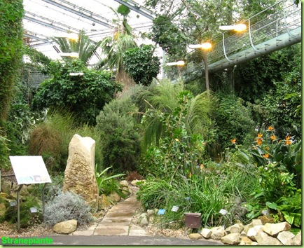 serra subtropicale amsterdam