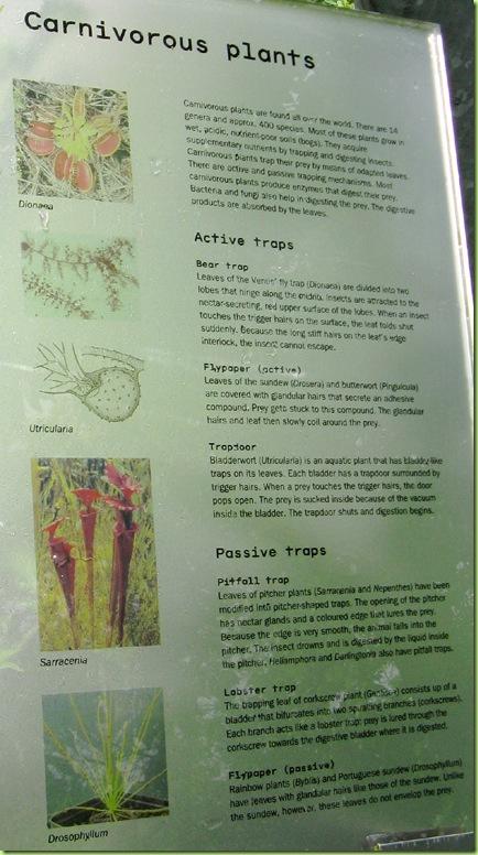 Carnivorous plant piante carnivore