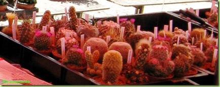 cactus-freiburg