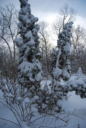 Snow storm_35January 2011
