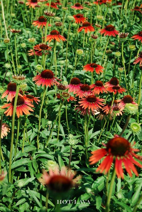 Plant Group _400open house copy