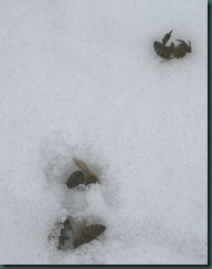 deadsnowbees