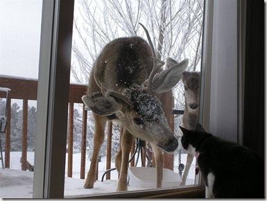 deer_bmp
