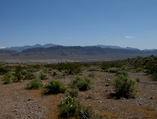wildflowers are blooming looking south toward Tecopa