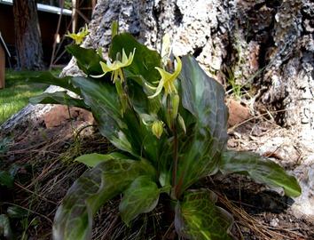 flowers 5-12-2011 10-01-00 AM
