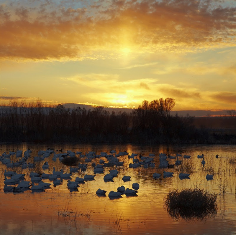 Dawn at Bosque del Apache, NWR, Soccorom, New Mexico