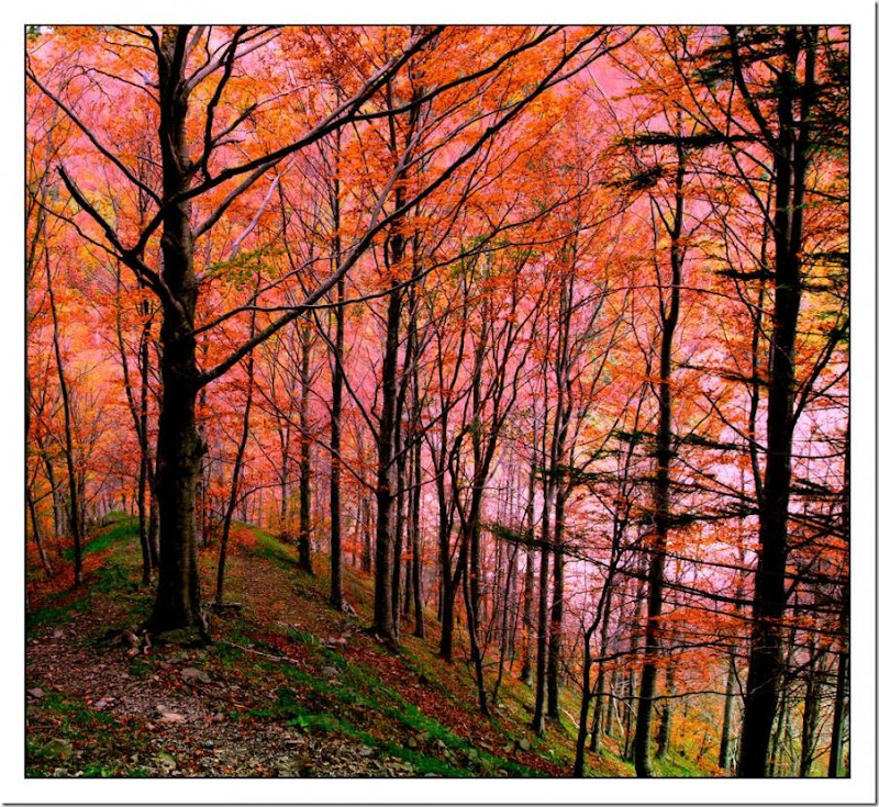 autumn in a nature park in lucca Italy