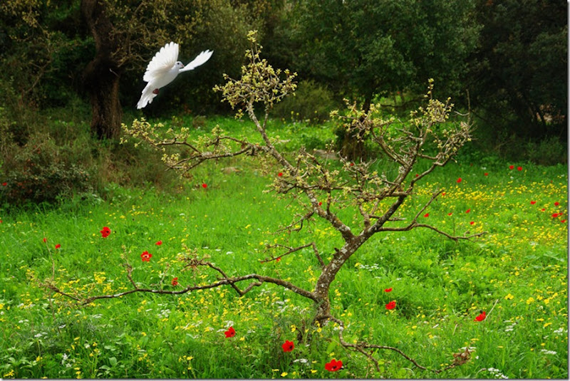 Peace in the Gardens of Nazareth Hills, Israel by  hermin abramovitch