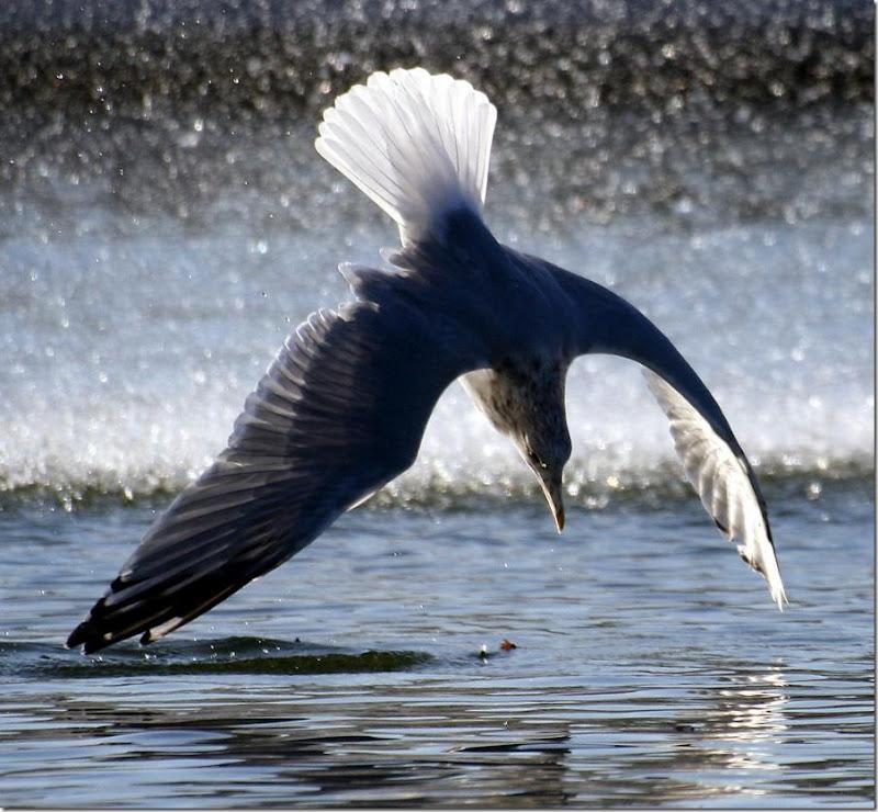 Bird Dive