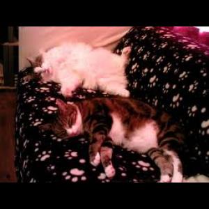 Cat Dream Interpretations Cover