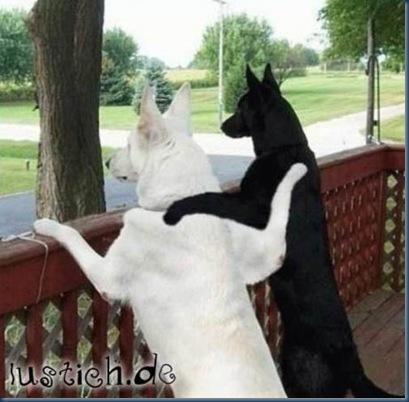 1012-hunde-freunde