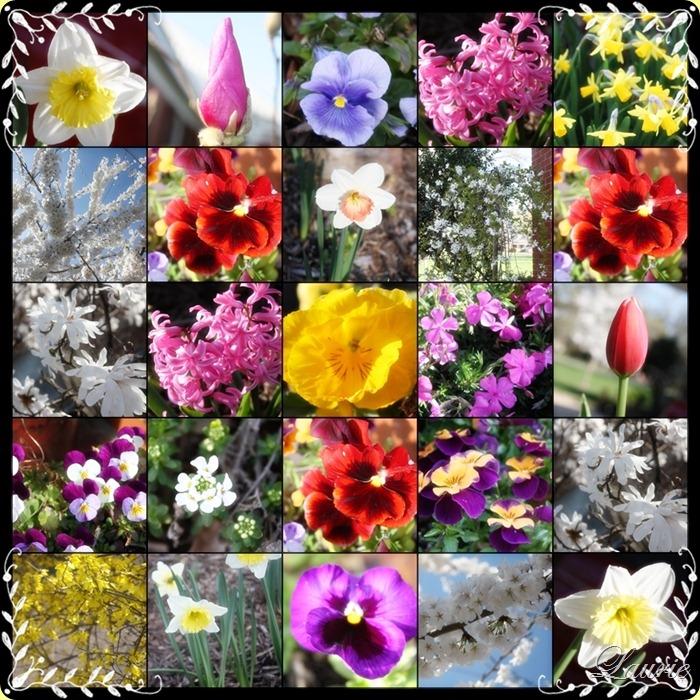 flower mos