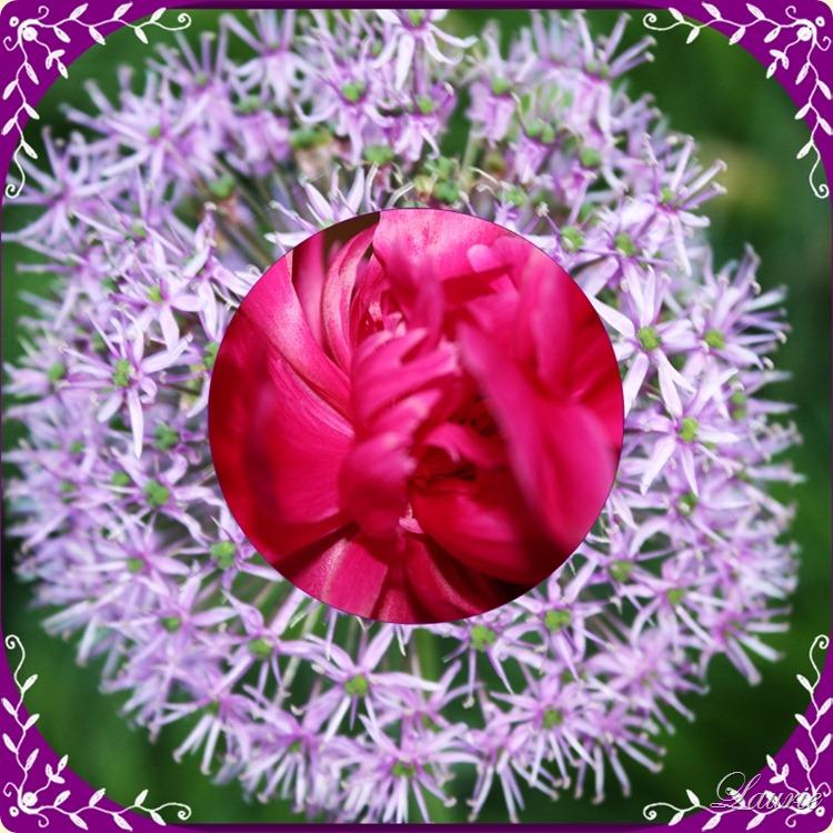 purple w pink flwr