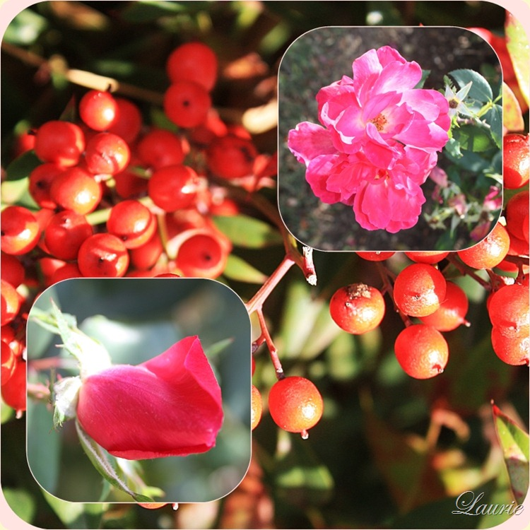 roses - berries