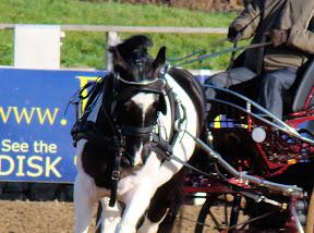 Arden Dexter Pro Wipe Clean BioThane Single Horse Harness Sliding Backband