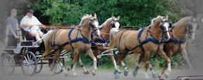 Arden Dexter Pro Wipe Clean BioThane Team Horse Harness