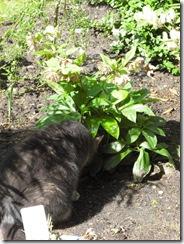 pupi im busch
