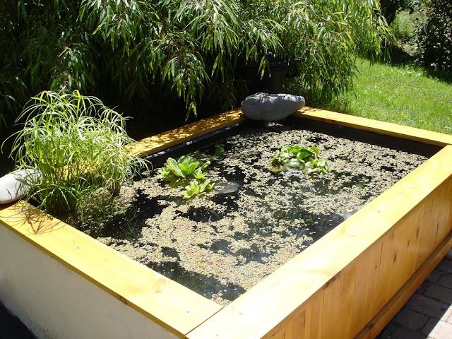 Le forum de passion bassin bassin de jardin baignade for Bassin poisson exterieur hors sol