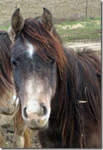 Equesterie Tranquille-20090219_ET-Tarzan_002