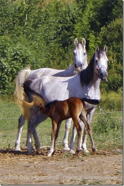 Equesterie Tranquille, La Pène