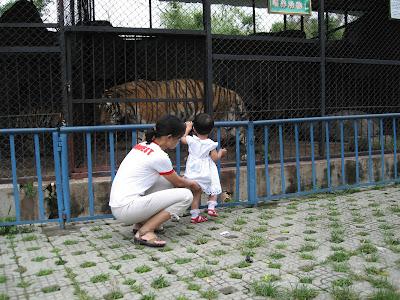 不怕大老虎,宝宝最勇敢了