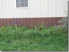 WIP& Garden 021