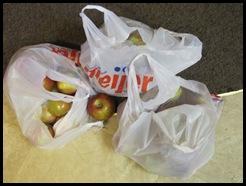apples 042