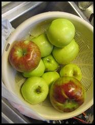 apples 041